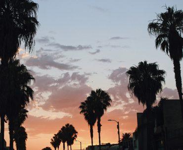 venice beach sunset and palm trees
